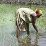 Coopération transfrontalière: la Guinée-Bissau adhère à la Convention sur l'eau